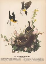"""1942 Vintage AUDUBON BIRDS #163 /""""YELLOW PALM WARBLER/"""" Color Art Plate Lithograph"""