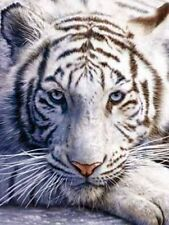 Beautiful Matted White Tiger Foil Art Print~Affordable Art~8x10 Animal