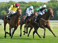 Horse Racing Reliable Place + Lay the Place + Placepot Betting Systems