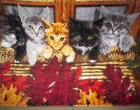 New Kitty Cats in the Window Kitten Beach Bath Pool Gift Velour Towel Kittens