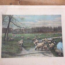 Antique c19th Victorian colour Print Lithograph Sheep Parkland Scene Abundance