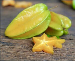 Star fruit (CARAMBOLA) Tropical Live Fruit Tree 1'-2'