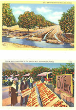 CA - ORANGE GROVES & Farmer's Market People Buying ORANGES - 2 Views