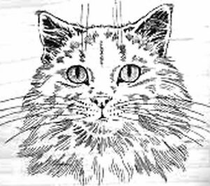 Rare - Long Haired Cat - Large Unmounted Red Rubber- Embossing Arts and Co