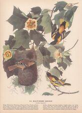 "1942 Vintage AUDUBON BIRDS #12 ""BALTIMORE ORIOLE"" Full Color Art Plate Litho"