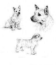 Norwich Terrier - 1963 Vintage Dog Print - Matted *