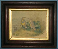 ANTIQUE MAHOGANY FRAME GILT SIGHT EDGE COLORED BIRD PRINT