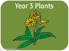 KS2 Y3 Science topic PLANTS teaching resources IWB display worksheets on CD