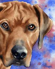 Rhodesian Ridgeback Dog Watercolor 8 x 10 Art Print Signed by Artist Djr