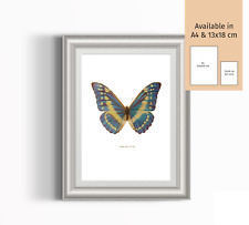 Butterfly botanical illustration 13x18cm (5x7 inch) colour print.