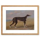 Painting Animal Sport Garrard George Fox Greyhound Turk Framed Wall Art Print