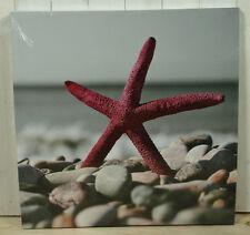 "Maritimes Bild, Foto, Druck auf Leinwand ""Roter Seestern"" 60x60cm Wanddeko"