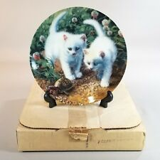 Knowles Amy Brackenbury A Chance Meeting: White American Shorthairs Plate 5683B