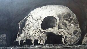 VANITE TETE DE MORT CRANE DESSIN  ORIGINAL ENCRE DE CHINE L LEFBVRE