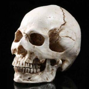Human Skull Resin Replica Anatomy Teaching Model Collect Bar Party ,