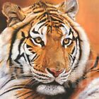 """27W""""x27H"""" PORTRAIT D'ALIBA by DANIELLE BECK -GLARING TIGER CAT CHOICES of CANVAS"""