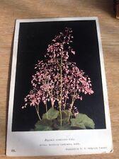 Postcard Used Royal Botanic Gardens Kew Begonia 1953 f1b