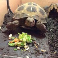 Fennstones large natural slate vivarium tortoise beak lizard basking claw trim