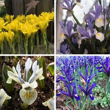 Iris Full Sun Bulbs, Corms, Roots & Rhizomes