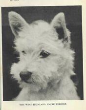 "West Highland White Terrier - 1931 Vintage Dog Print - Matted ""P"""