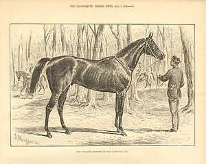 Race Horse, New Holland, Winner Of The Goodwood Cup, Vintage 1876 Antique Print