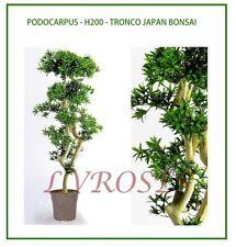 PODOCARPUS 200cm Tronco Japan Piante finte Pianta  finta Piante artificiali