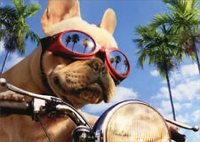 Motorcycle Chopper Dog Avanti Humorous Funny Birthday Card