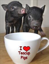 Micro Pigs Fridge Magnet - Wildlife