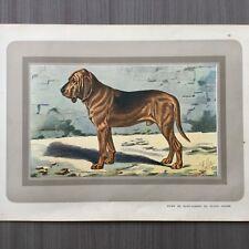 Chien de Sain-Hubert ou Blood Hound -Les chiens de chasse - jachthonden