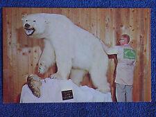 World Record Class Polar Bear/Taxidermy by Knopp Bros-Spokane WA/Chrome Postcard