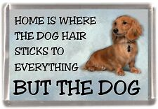 """Dachshund Longhaired Dog Fridge Magnet """"Home is Where"""" Design No 1 by Starprint"""