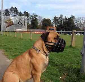 Light leather Dog Muzzle for Dogue de Bordeaux and Bullmastiff