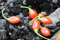 Catarina chilli (Capsicum annuum)     25 Seeds