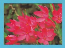 FLOWERS - GARDENERS' WORLD MAGAZINE POSTCARD SIZED CARD  - SUMMER BULBS    ( C )