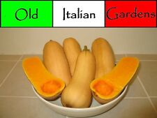 40 Heirloom Butternut Winter Squash Seeds Easy To Grow High Yields Non GMO