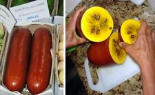 10 Graines de Melon banane, Sicana odorifera, Cassabanana seeds