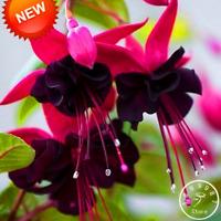 Purple Double Petals Hanging Fuchsia Bonsai Flowers 100 PCS Seeds Free Shipping