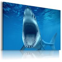 SHARK Domestic And Wild Animals Canvas Wall Art Picture Large AN101  MATAGA