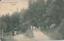 PC51930 Entrance to Hakgalla Gardens. Plate. No 62. B. Hopkins