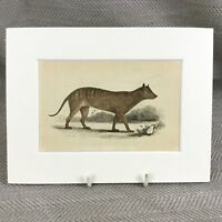1853 New South Wales Wolf Wolves Wild Animals Victorian Antique Original Print