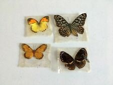 Lot of 4 Real Dried Preserved Taxidermy Butterfly/Moth?