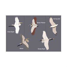 Skyflight Coastal Birds Seagull Hanging Baby Classroom Mobile Educational Decor