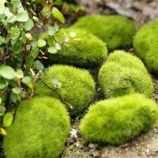 Seeds Moss Bonsai Ball Sagina Subulata Outdoor Grass Garden Decorative Plant