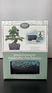 "Home Patio Ornament Decor 9"" Green Pine Bonsai Own Growing Kit Planter Gift Set"