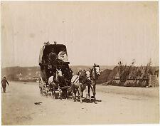 PHOTO VINTAGE : CHEVAUX en ATTELAGE attribué à ACHILLE QUINET vers 1870