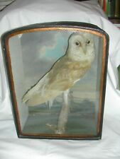 Antique Victorian taxidermy stuffed Owl with diorama case & painted background