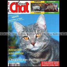 ATOUT CHAT N°243 ★ RACES : LE SIAMOIS / LE SOMALI ★ ORPHEE DE HAMON (TONKINOIS)