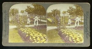 Pan American Hand-colored Stereoview Golden Beauties Lincoln Park #4512 ~1900