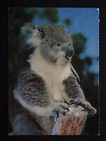 KOALA AUSTRALIA 1982 POSTCARD