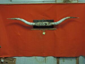 "MOUNTED STEER Horns 7 FT 10 IN Base 14 1/2"" MOUNTED   Horns  TEXAS LONGHORN 3820"